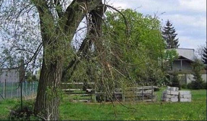 Жители тихой деревушки отомстили лихачу (2 фото)