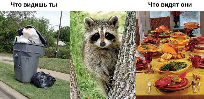 Что и как видят животные? (11 фото)