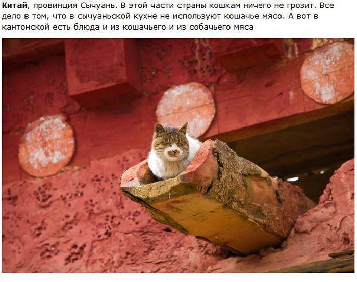 Города котиков (28 фото)