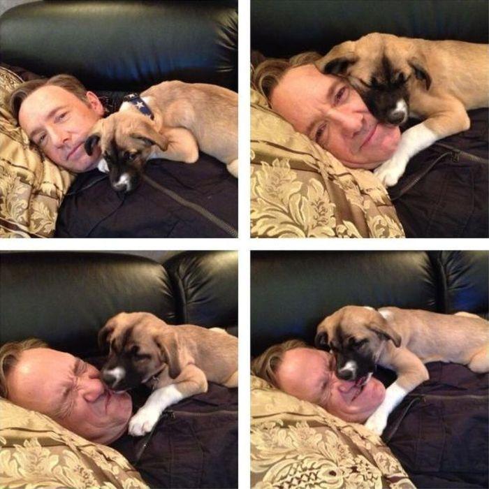 Прекрасные фото за нос, питомец, собака, укусил
