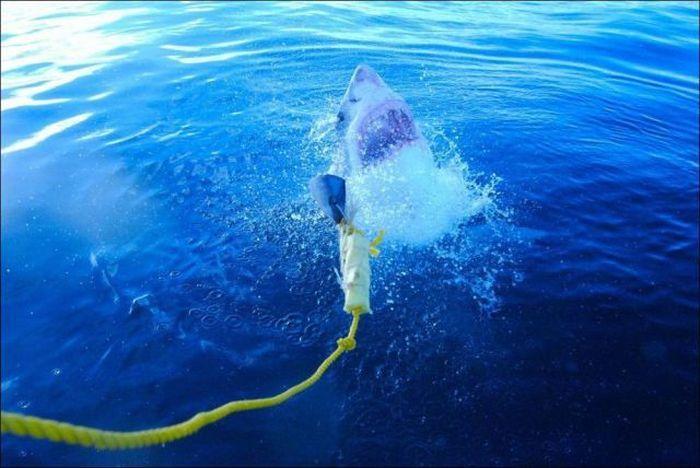 Фотоприкол недели акула, жесть, из воды, пасть