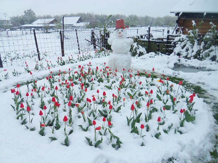 Крутые фотки огород, садик, снеговик, цветы