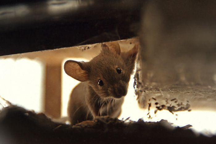 Фотоприкол дня животное, крутая фотография, мышка
