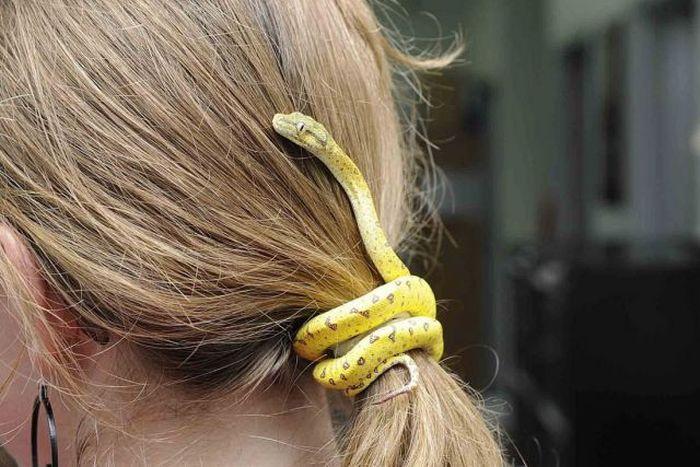 Яркие фото волосы, змея, прикольная вещь, резинка