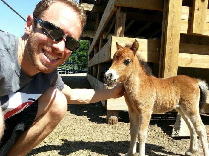 Фотоподборка конь, лошадь, пони