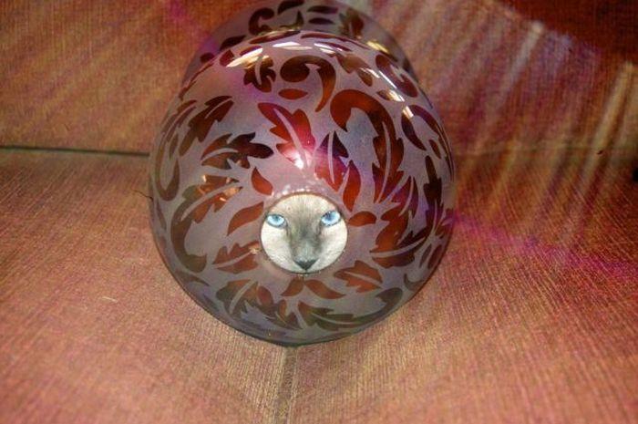 Красивые фото ваза, кот