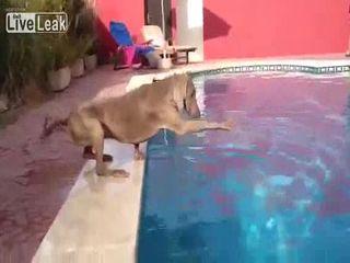 Собака-доставака