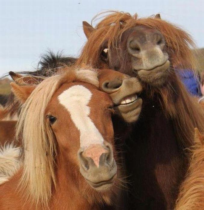 Улетное фото выражение лица, животное, лошадь