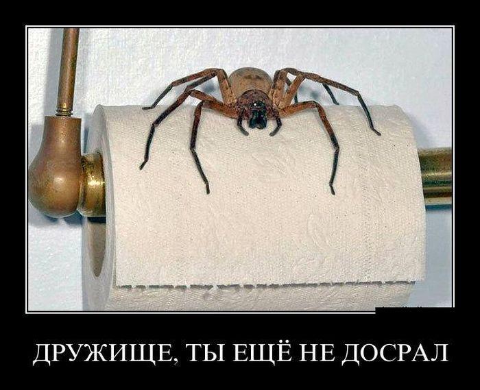 демотиваторы про паук представителей этой