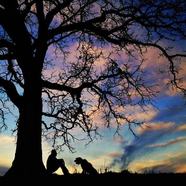дуб, дерево, зима, закат, природа