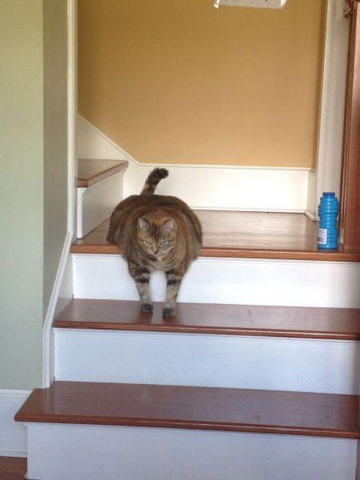 Смешной фотоприкол лестница, поза, толстый кот