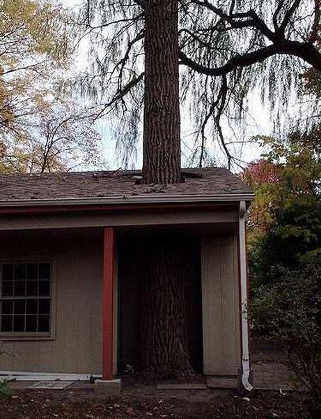 Фотожесть дерево, дыра, здание, крыша