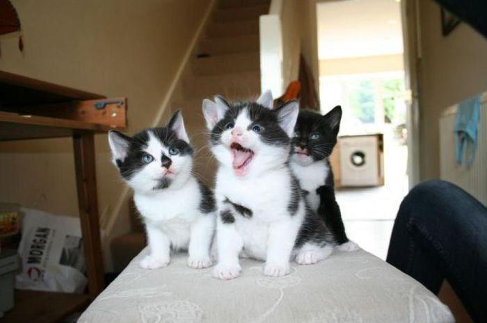 Фотоподборка котята