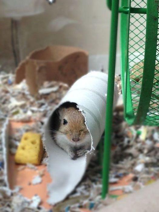 Зачетное фото мышка, мышь