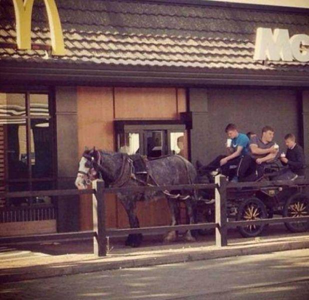 Юмор лошадь, макавто, макдональдс, упряжка