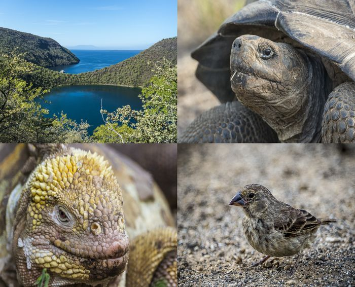 остров, обитатели, черепаха, экскурсия