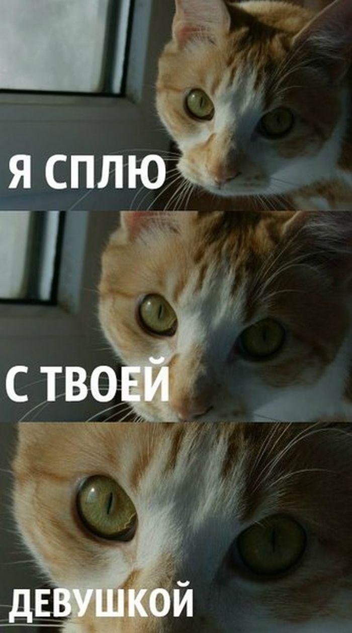 Фотография выражение лица, глаза, кот, питомец