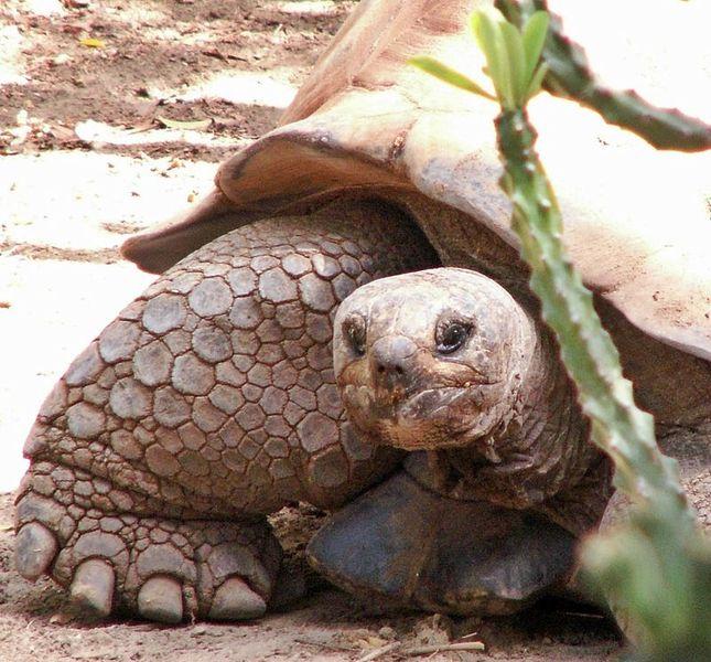 Всемирный день черепахи (World Turtle Day) Tn