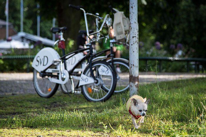 авто, велосипеды, транспорт, парковка, велопарковка, велопрокат