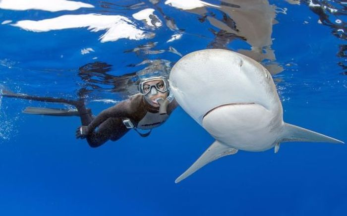 Фотоприкол бесплатно аквалангист, акула, под водой, рыба