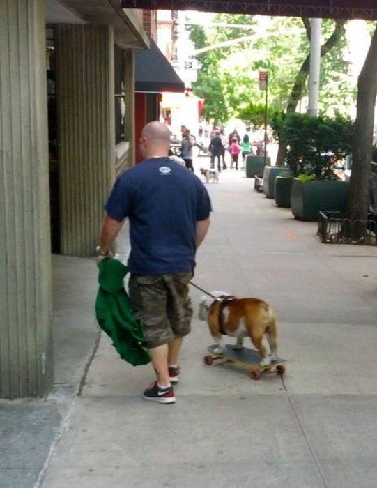 Фотография питомец, прикол, скейтборд, собака