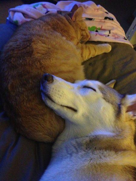 Новые фото кот, питомцы, собака, спят