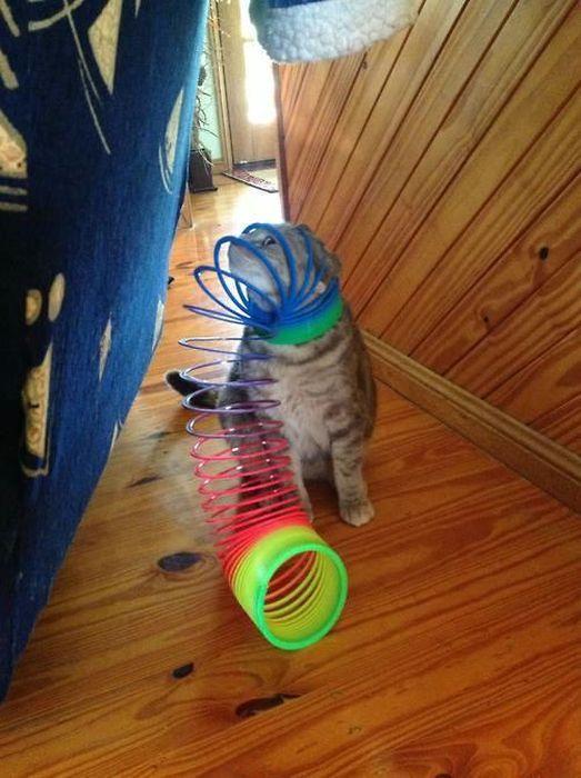 Смешные рисунки засунул голову, игрушка, кот, прикол