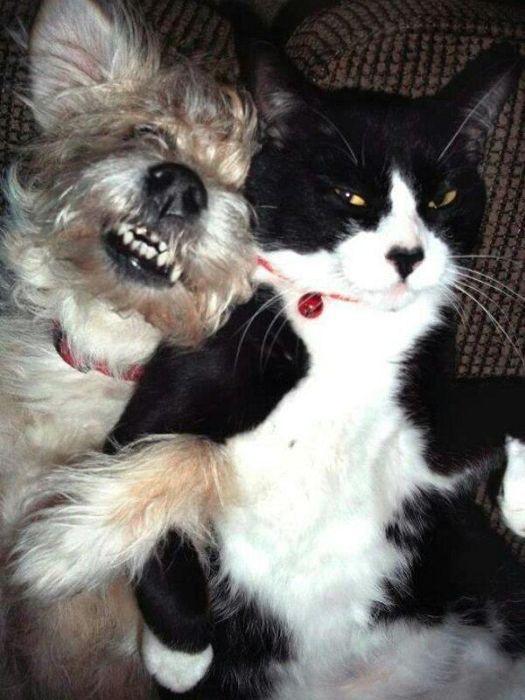 Смешной фотоприкол выражение лица, кот, собака, спит
