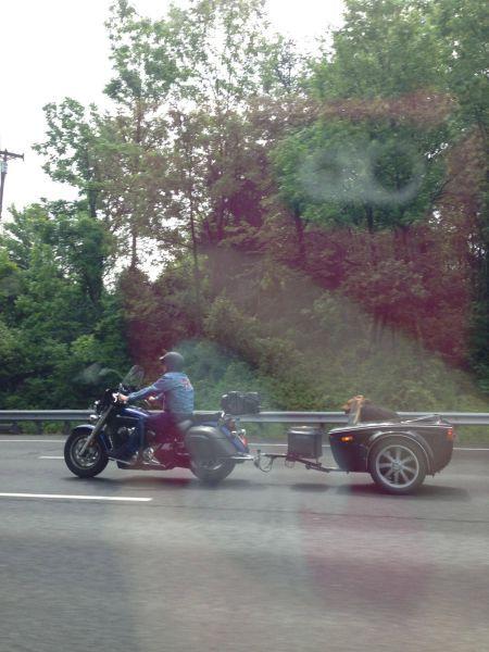 Зачетное фото мотоцикл, прицеп, собака