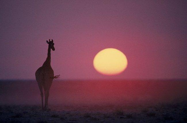 Животная жизнь в африке (44 фото)