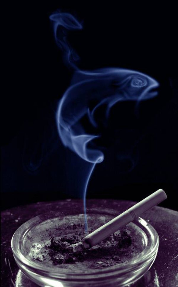Дымовые завесы (15 фото)