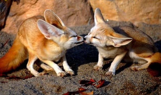 Влюблённые животные.