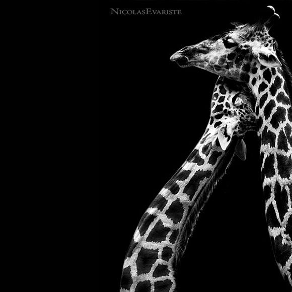 Красивые фото зверей (27 фото)