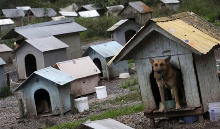 Жизнь бездомных собак в Бразилии (7 фото)