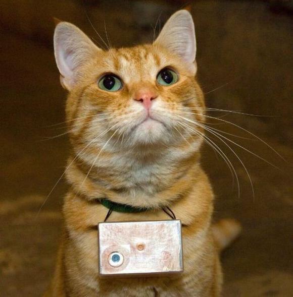 Мир каким  его видит кот (74 фото)