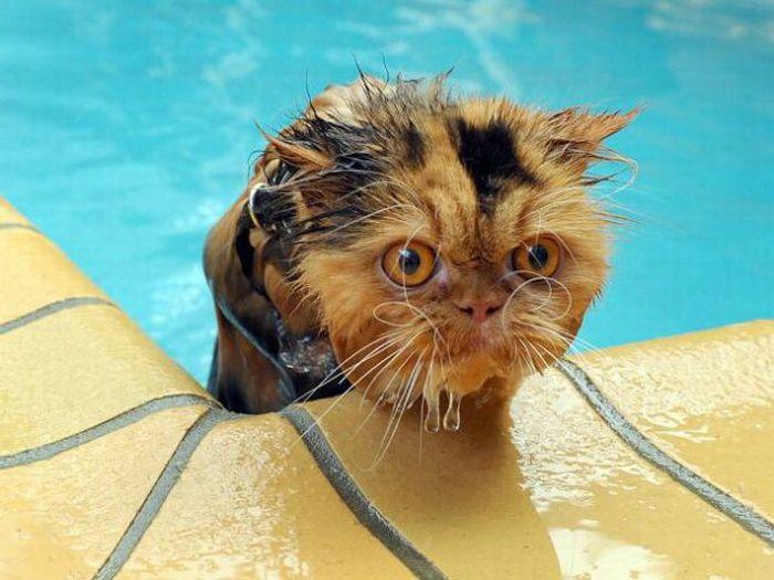 Водоплавающие кошаки (30 фото)
