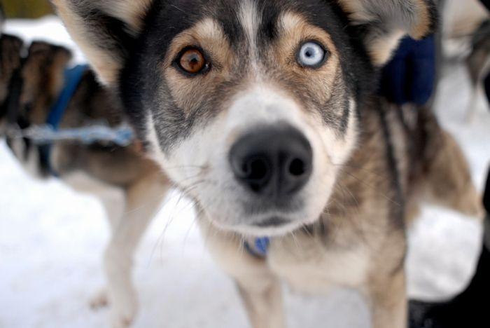 Классные фотографии собак (111 фото)