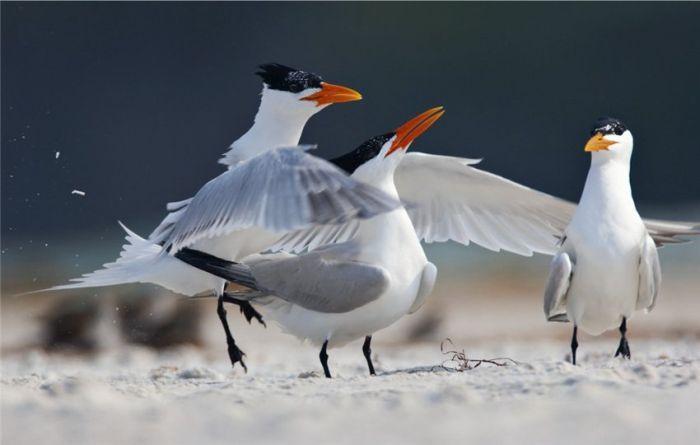 Красота живой природы (43 великолепных фото)
