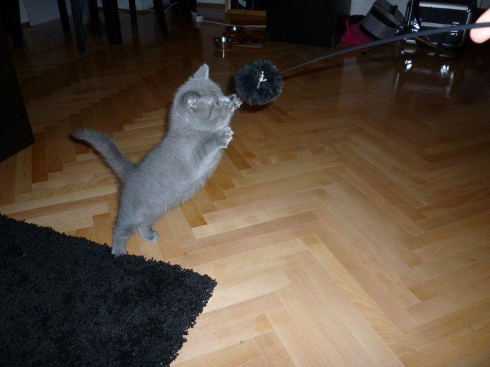 Прикольные котята (100 фото)