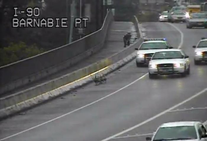 Три полицейские машины проводили семейство гусей в безопасное место (видео)