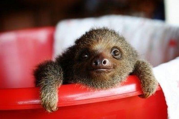 Очаровательные ленивцы (10 фото)