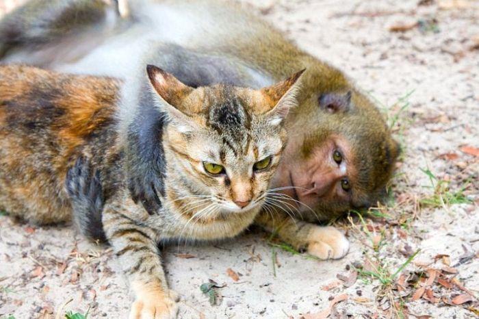Любовь обезьянки и котов (15 Фото)