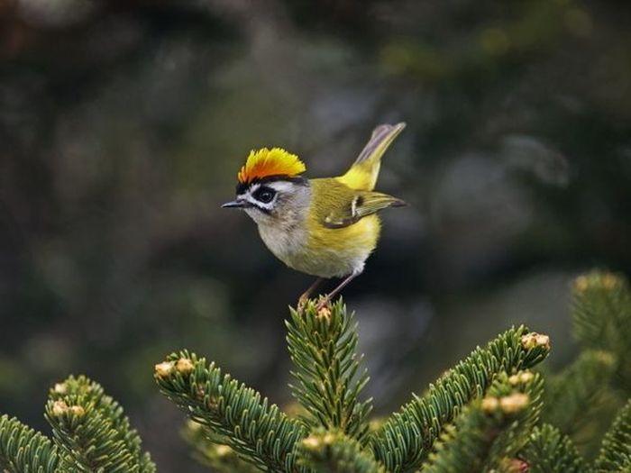 Прекрасные разноцветные птицы (15 Фото)