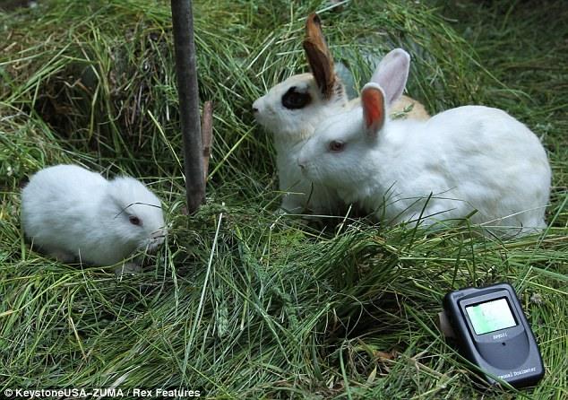 Кролики родившиеся рядом с Фукусимой ...(6 фото)
