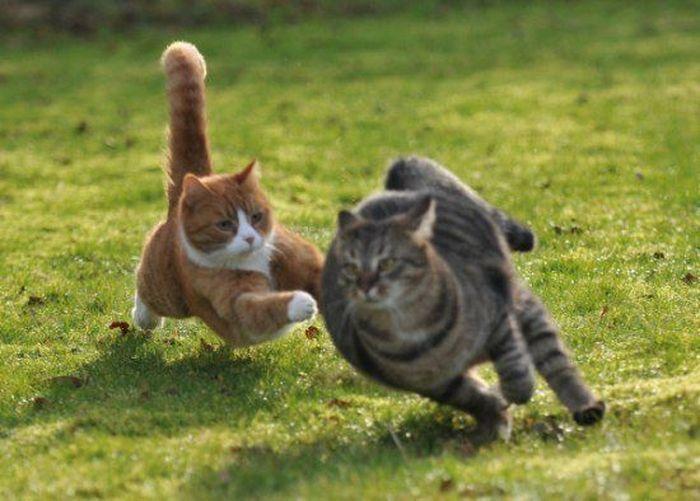 Битва двух котов (27 Фото)