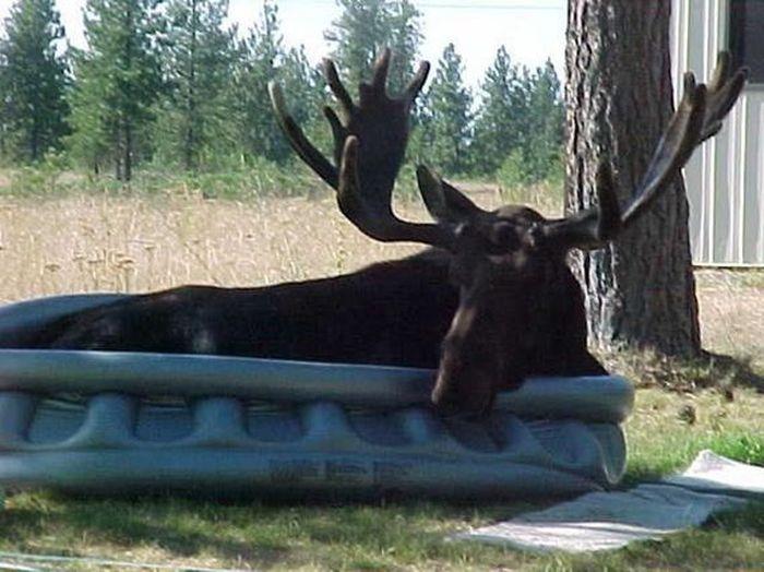 Дикие животные в бассейнах