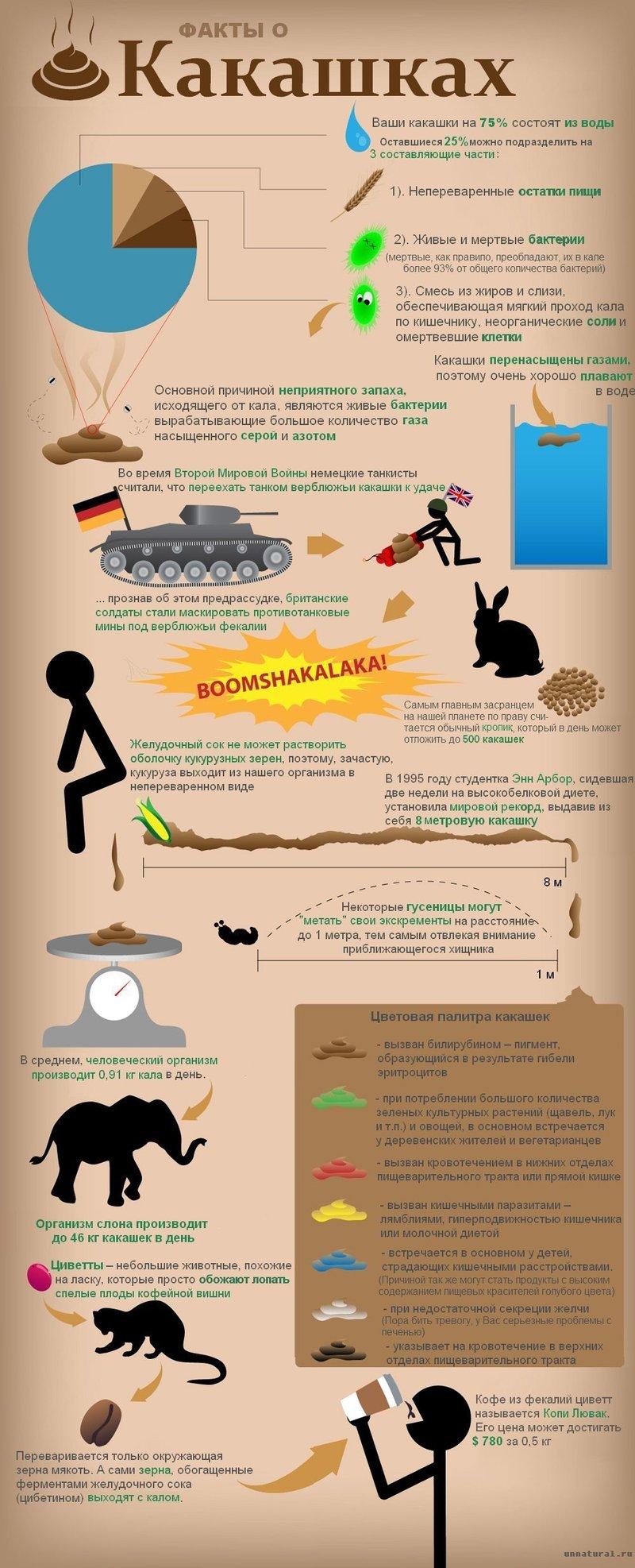 Факты о какашках (1 фото)