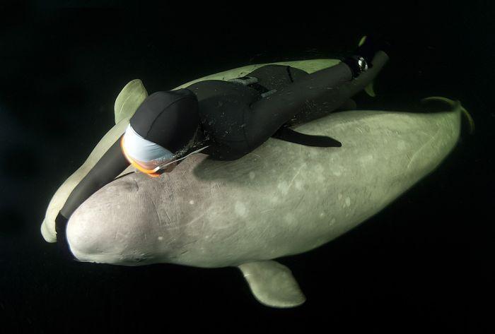 Человек и обитатели Белого моря (40 фото)