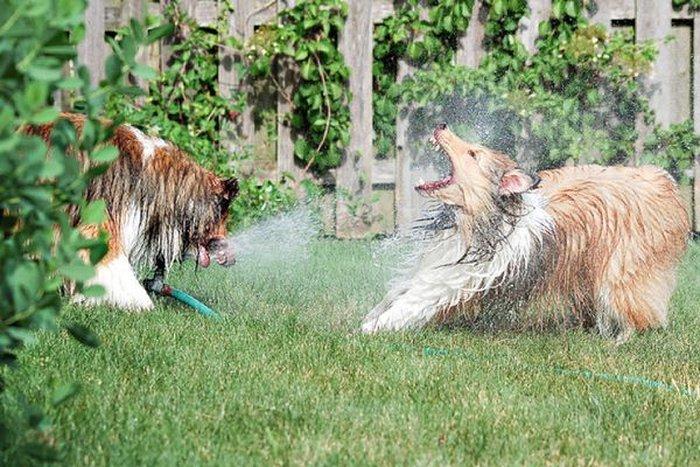 Собаки против фонтана (20 фото)