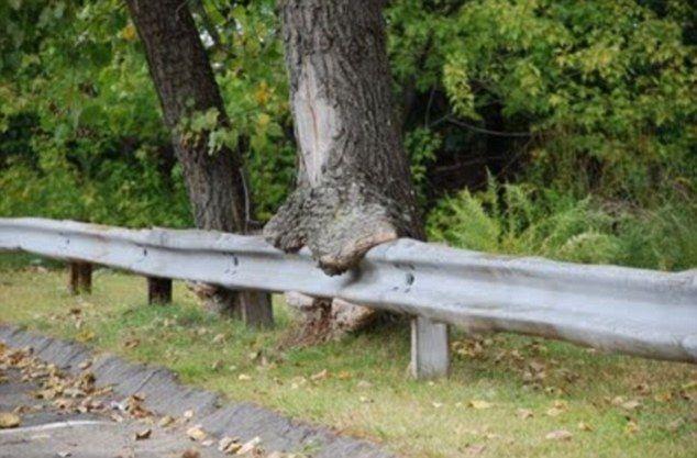 Изголодавшиеся деревья на улицах городов мира (9 фото)